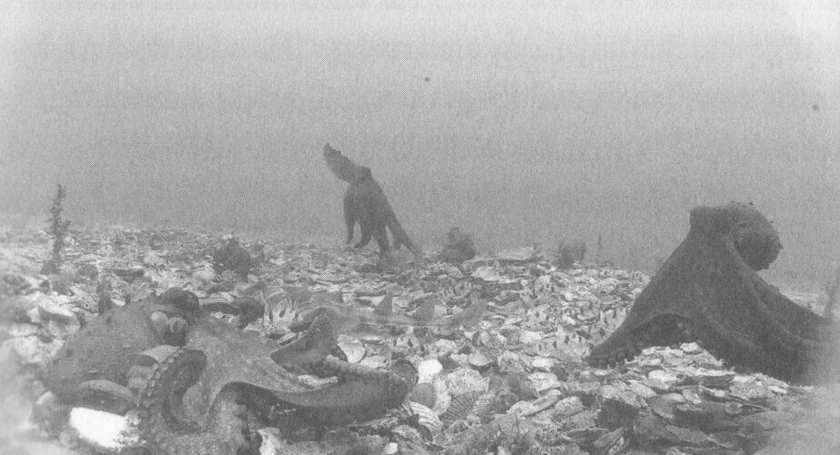 Krakenkultur: «Der Krake, das Meer und die tiefen Ursprünge des Bewusstseins» von Peter Godfrey-Smith